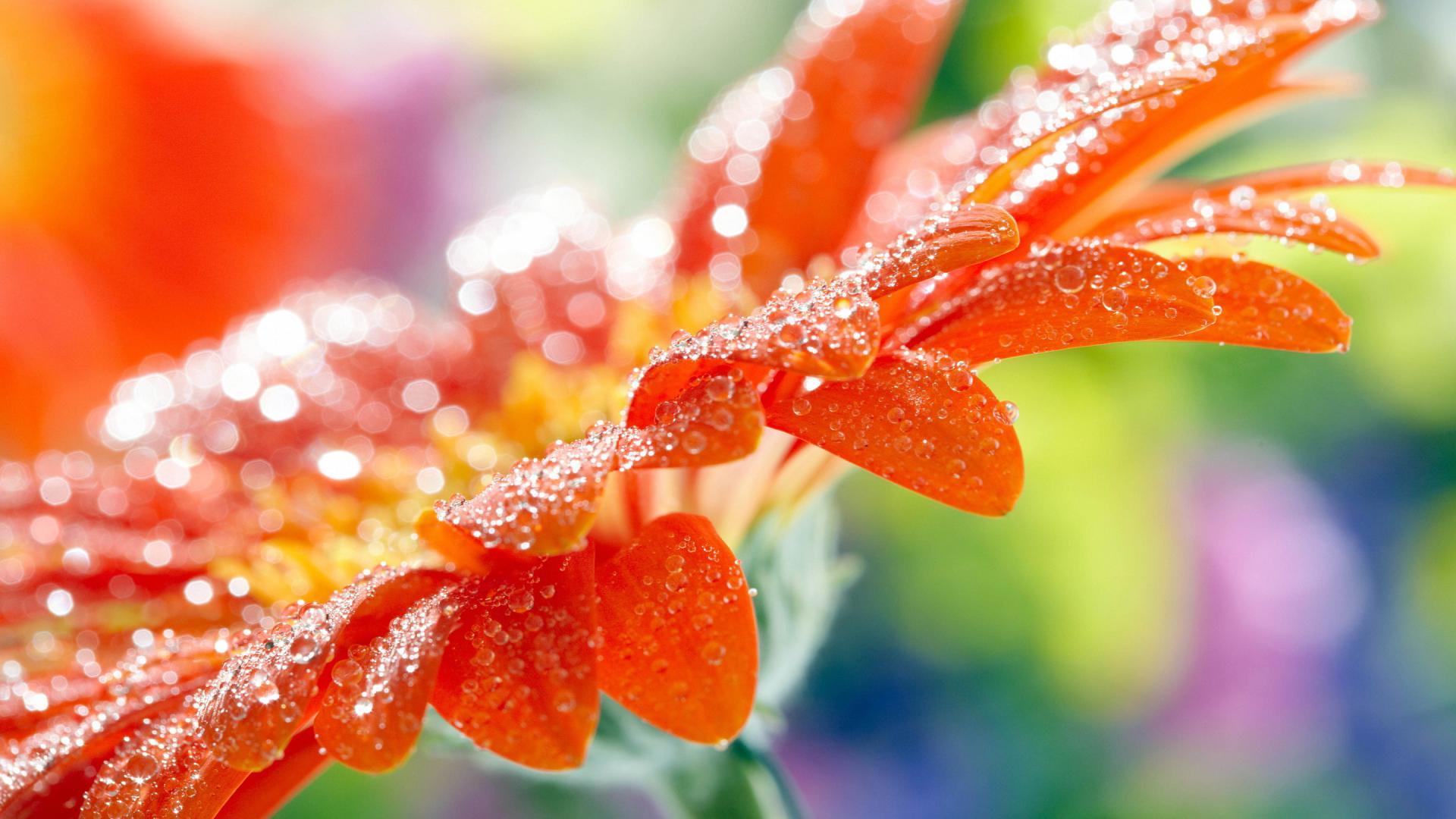 8 80883 beautiful wallpapers of nature for desktop free download