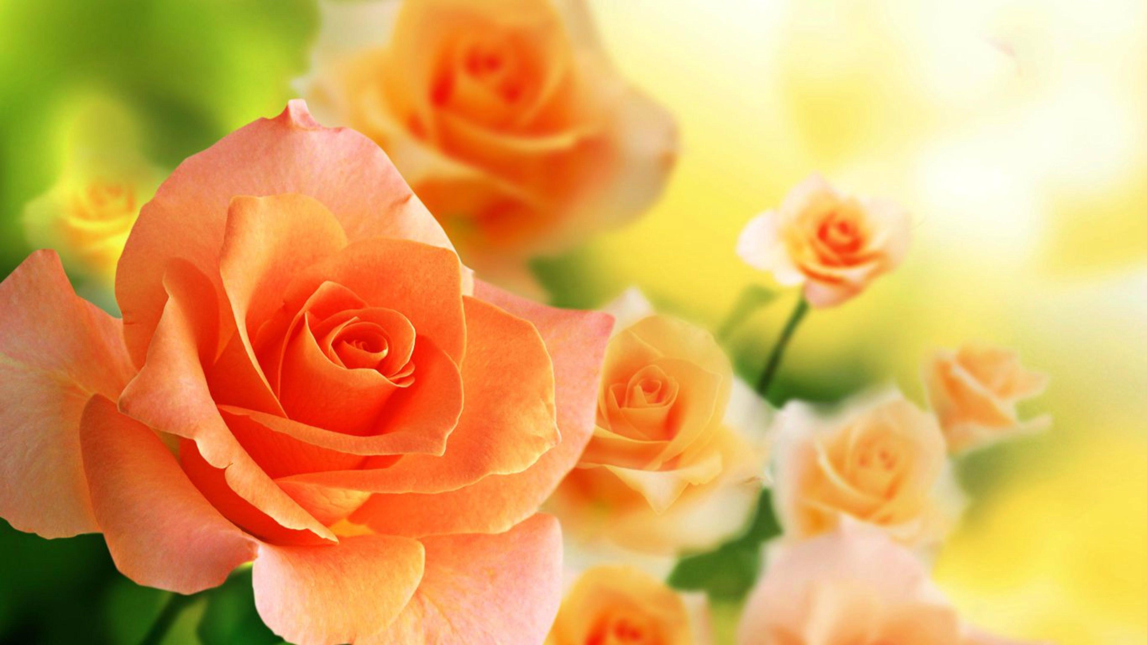Beautiful Rose Wallpaper Download Rose Wallpaper Download - Beautiful Orange Rose Flowers , HD Wallpaper & Backgrounds