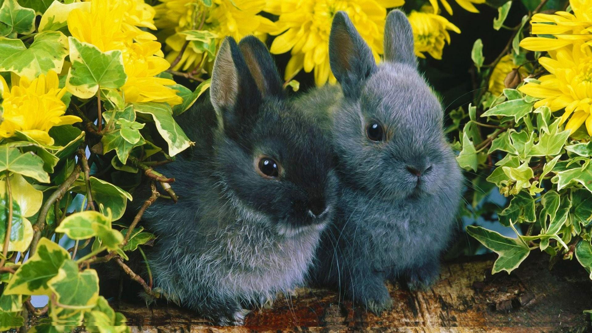 Free Beautiful Rabbit Pictures Desktop Rabbit Hd Wallpapers - New Beautiful Wallpapers Desktop , HD Wallpaper & Backgrounds