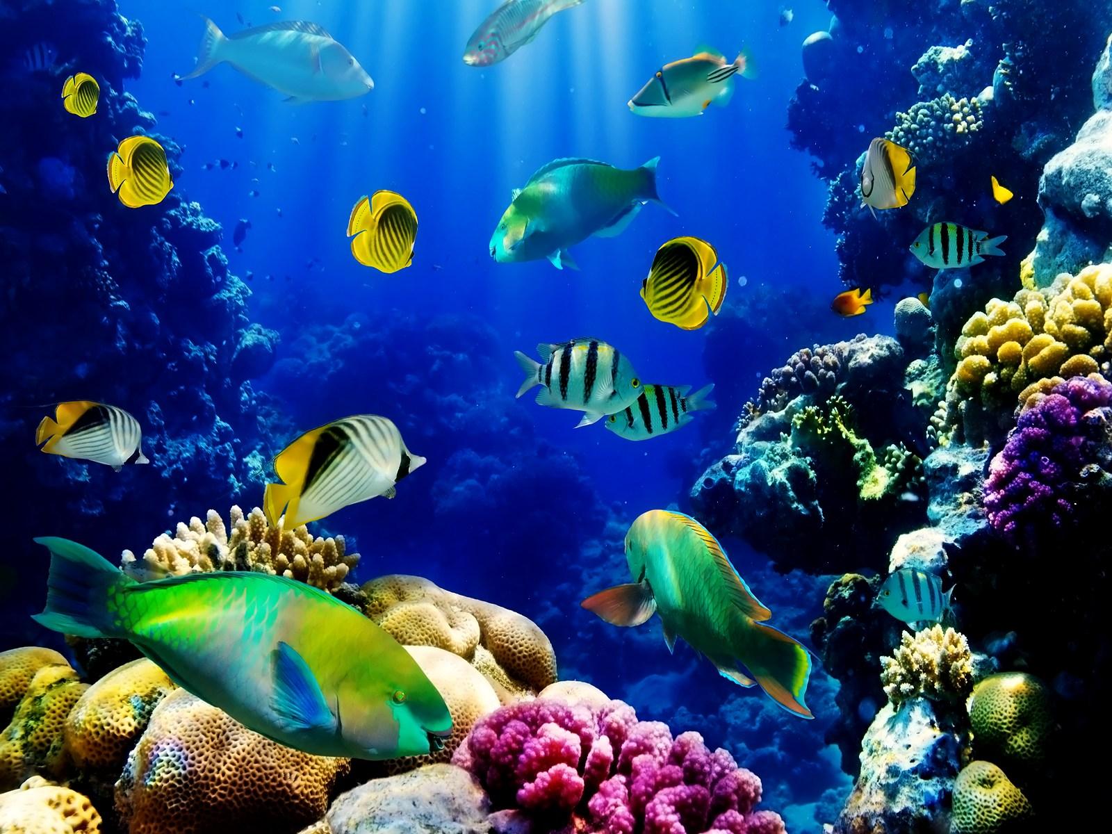 3d Live Wallpapers For Pc Wallpapersafari Aquarium Fish 89743 Hd Wallpaper Backgrounds Download
