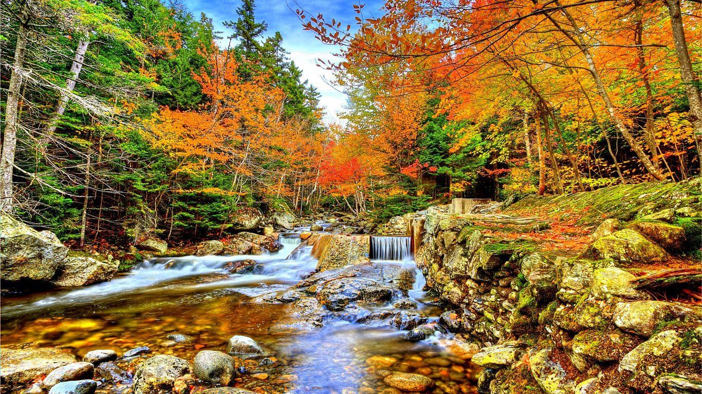 Forest Waterfalls River Rocks Hd 3d Live Wallpaper - Fonds Ecran Automne Forêt , HD Wallpaper & Backgrounds