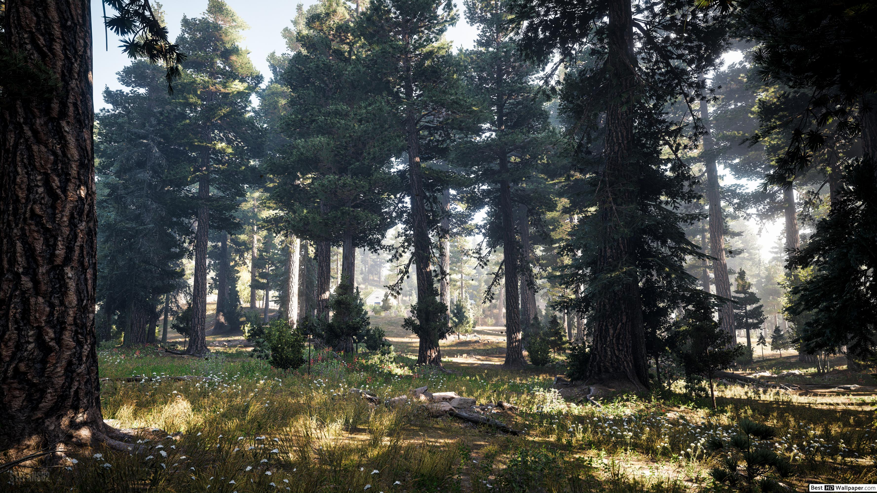 Uhd Far Cry 5 Wallpaper Forest 800135 Hd Wallpaper