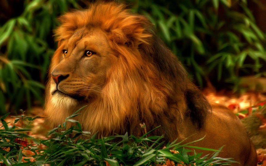 3d Lion Wallpaper Free Desktop - Strong And Of A Good Courage Kjv , HD Wallpaper & Backgrounds