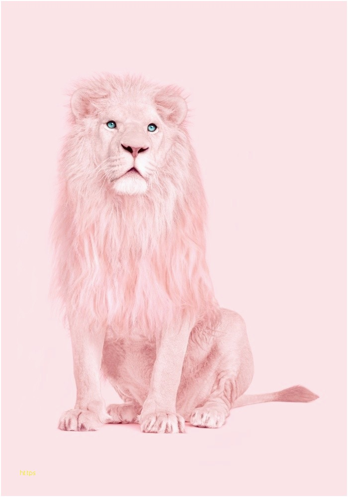 19 Luxury Hd Wallpaper Lion Elak Wallpaper Ideas 3d - Pink Lion , HD Wallpaper & Backgrounds