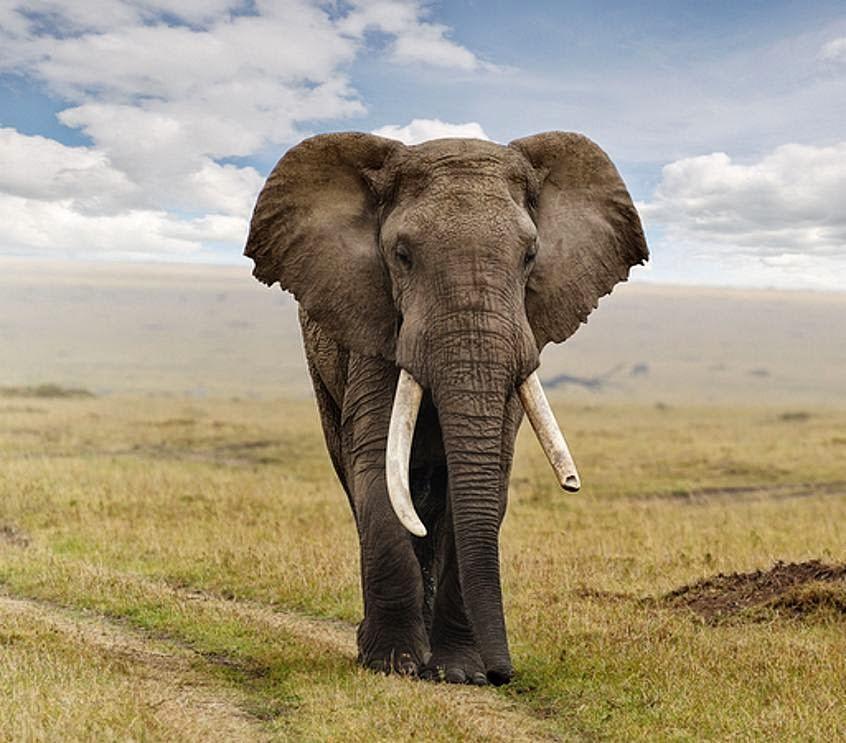 Sad Gajah Hd Elephant 801056 Hd Wallpaper Backgrounds