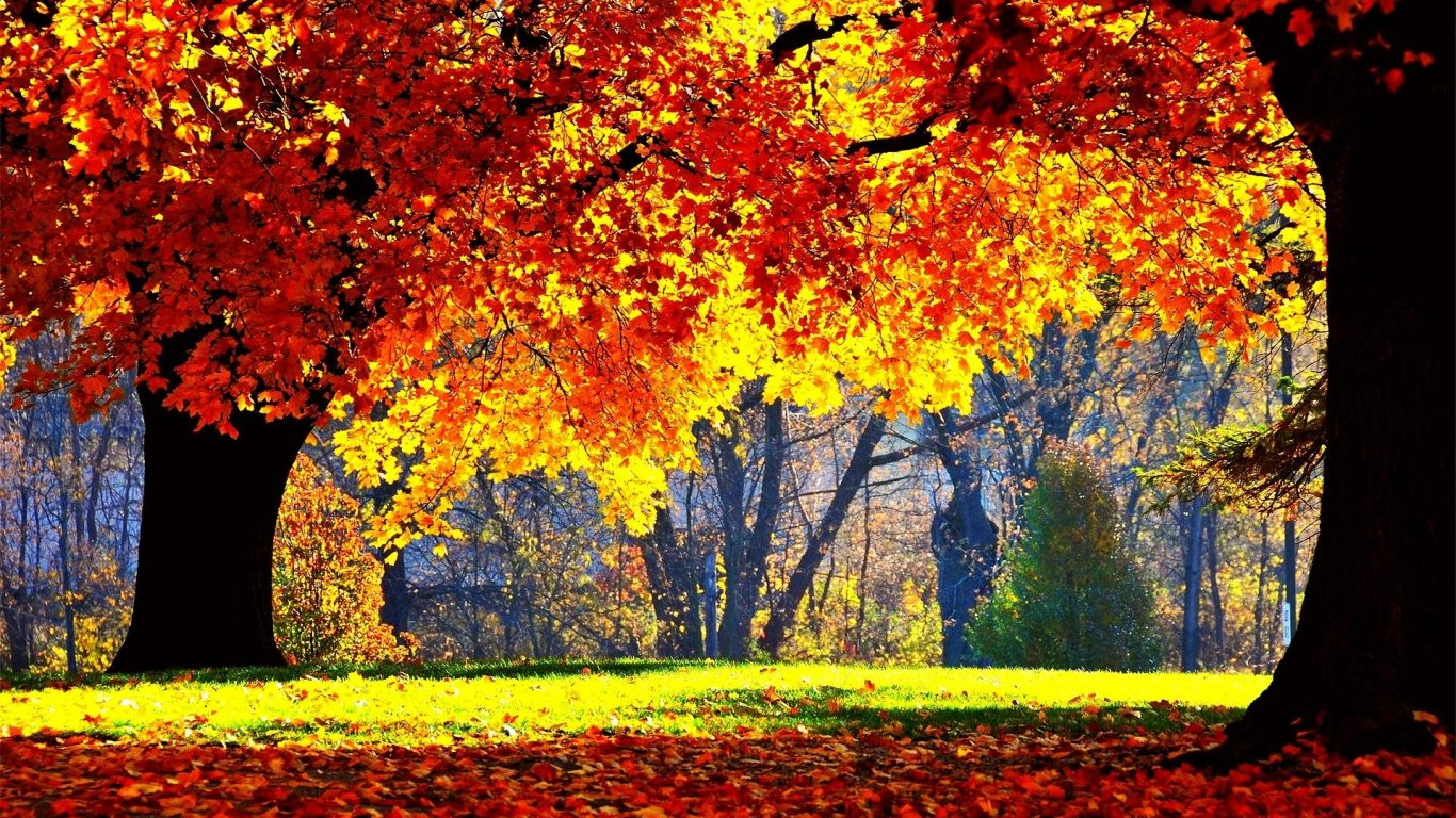 Landscape Nature Leaves Seasons Color Autumn Tree Leaf - Bright And Beautiful Scenery , HD Wallpaper & Backgrounds