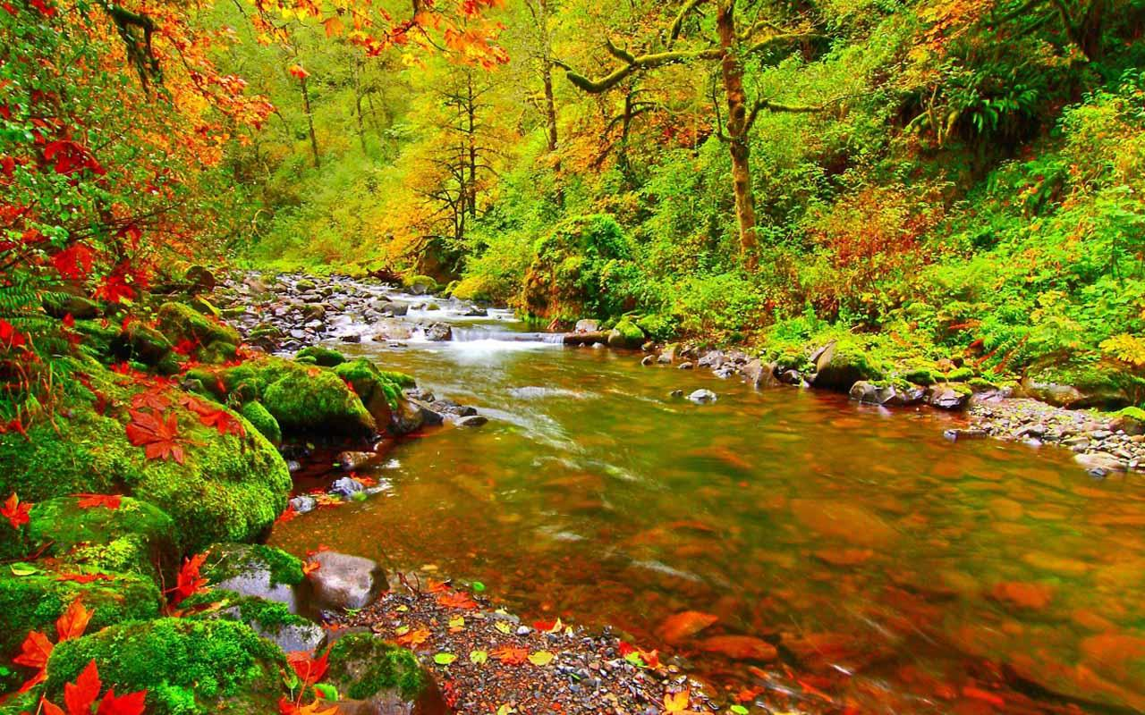 Nature Live Wallpaper Download - Fall Leaves Mountain Stream , HD Wallpaper & Backgrounds