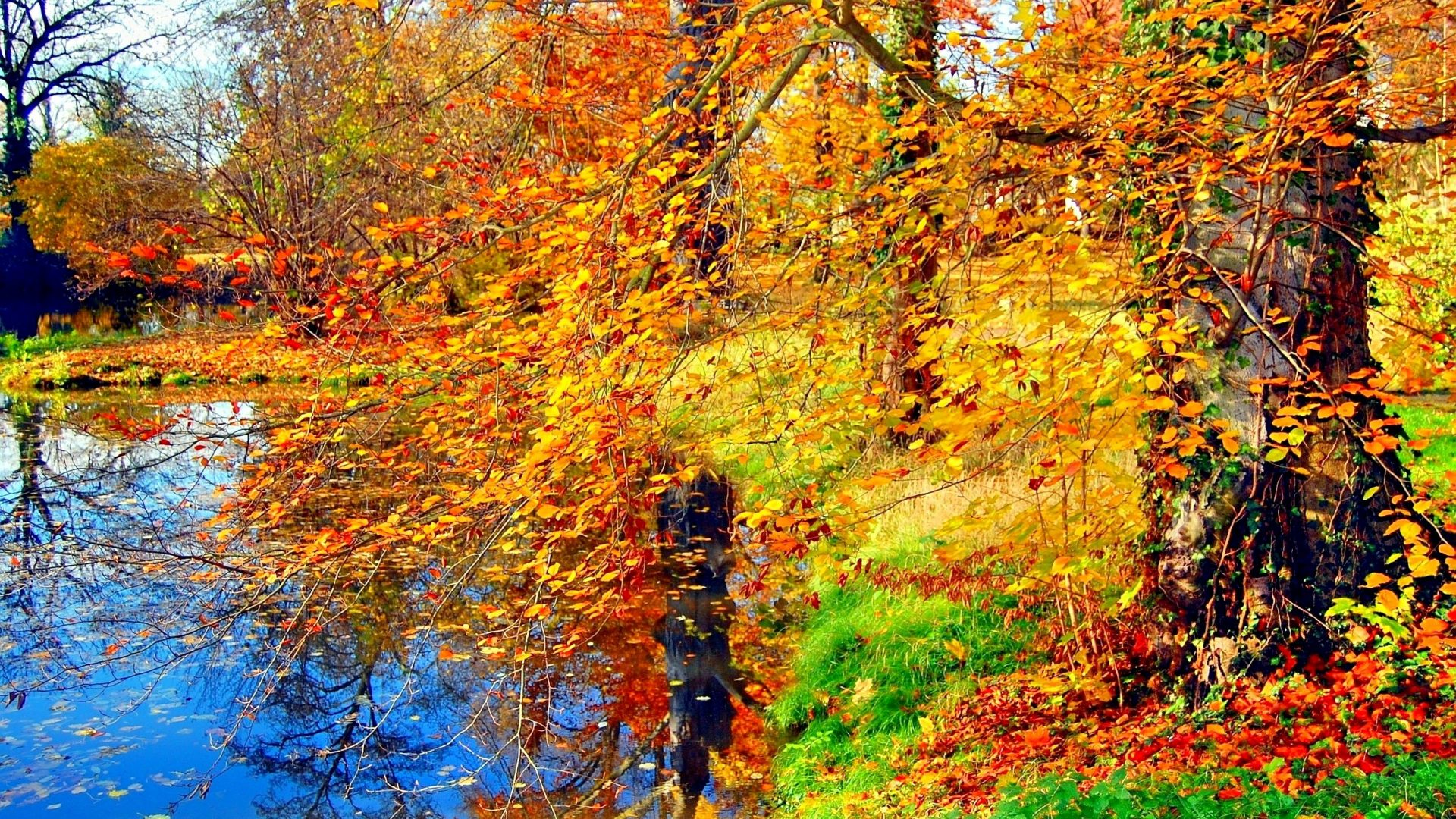Forest Seasons Nature Splendor Autumn Green Pond Colorful - Arvores Amarelas , HD Wallpaper & Backgrounds