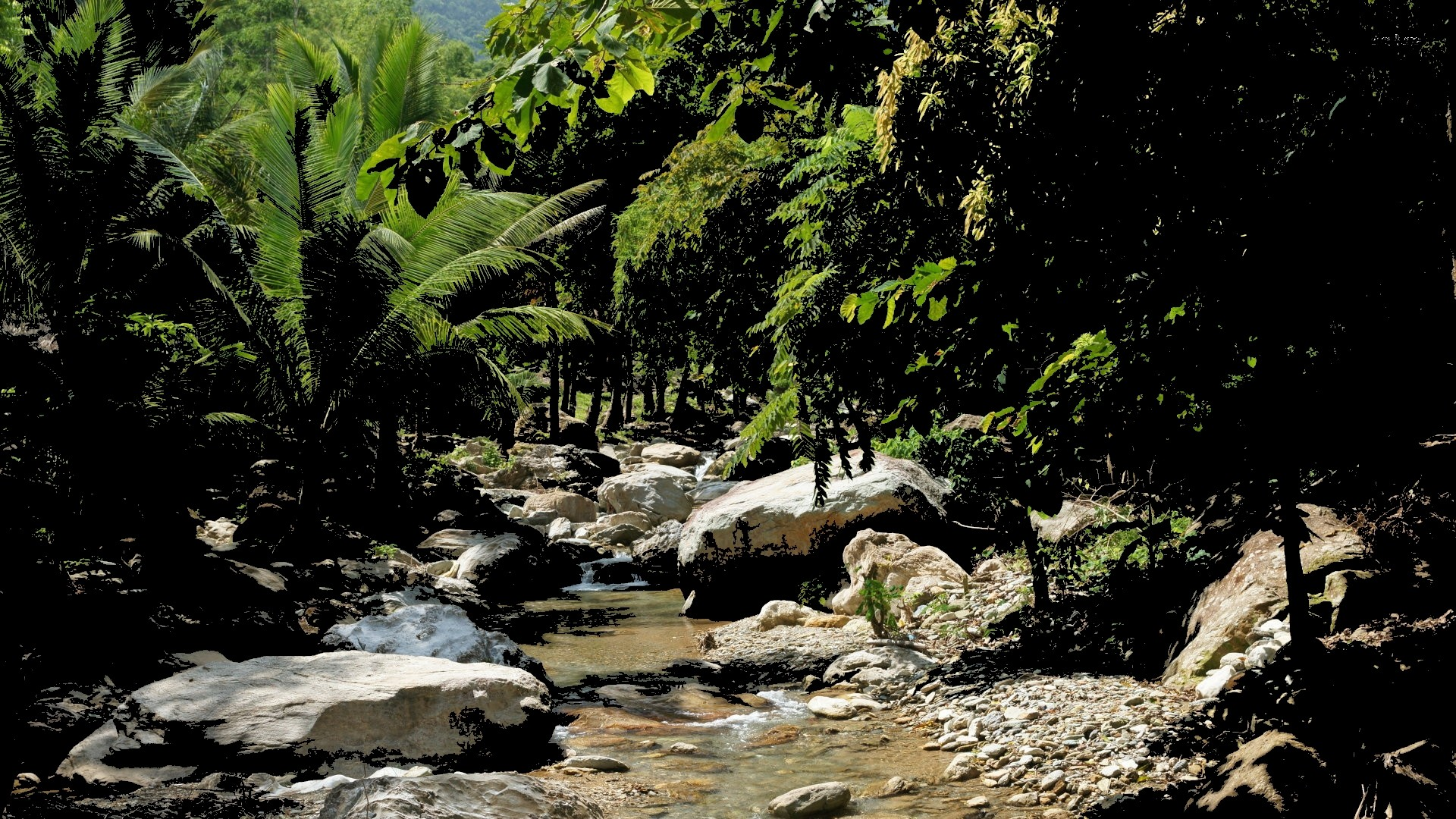 Jungle Stream Light Rock Palm Flowing Water Trees Nature - Stone With Leaves Jungle , HD Wallpaper & Backgrounds