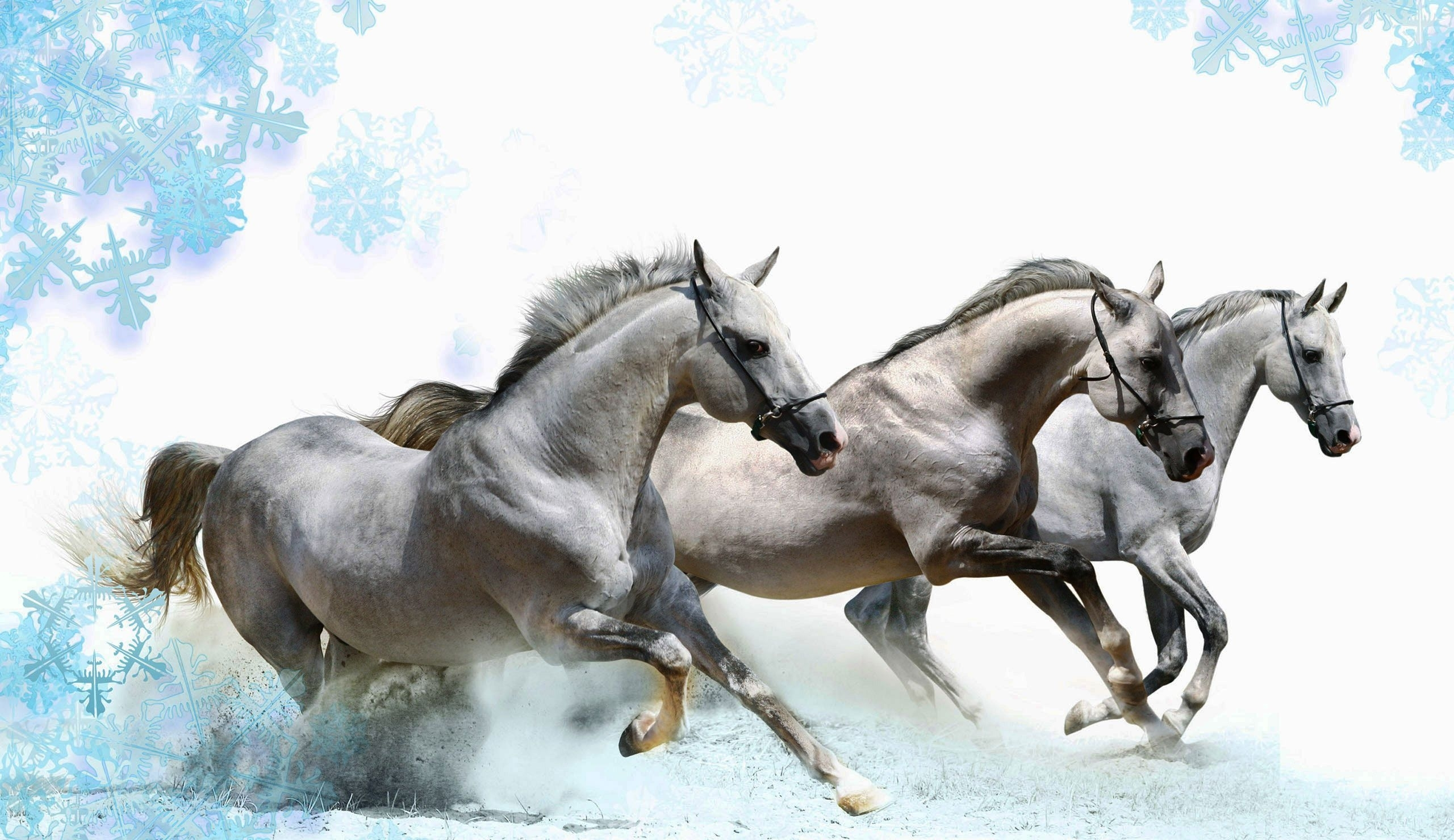 Amazing Running Horse Live Wallpaper For Pc - Running Horses Pictures As Per Vastu , HD Wallpaper & Backgrounds