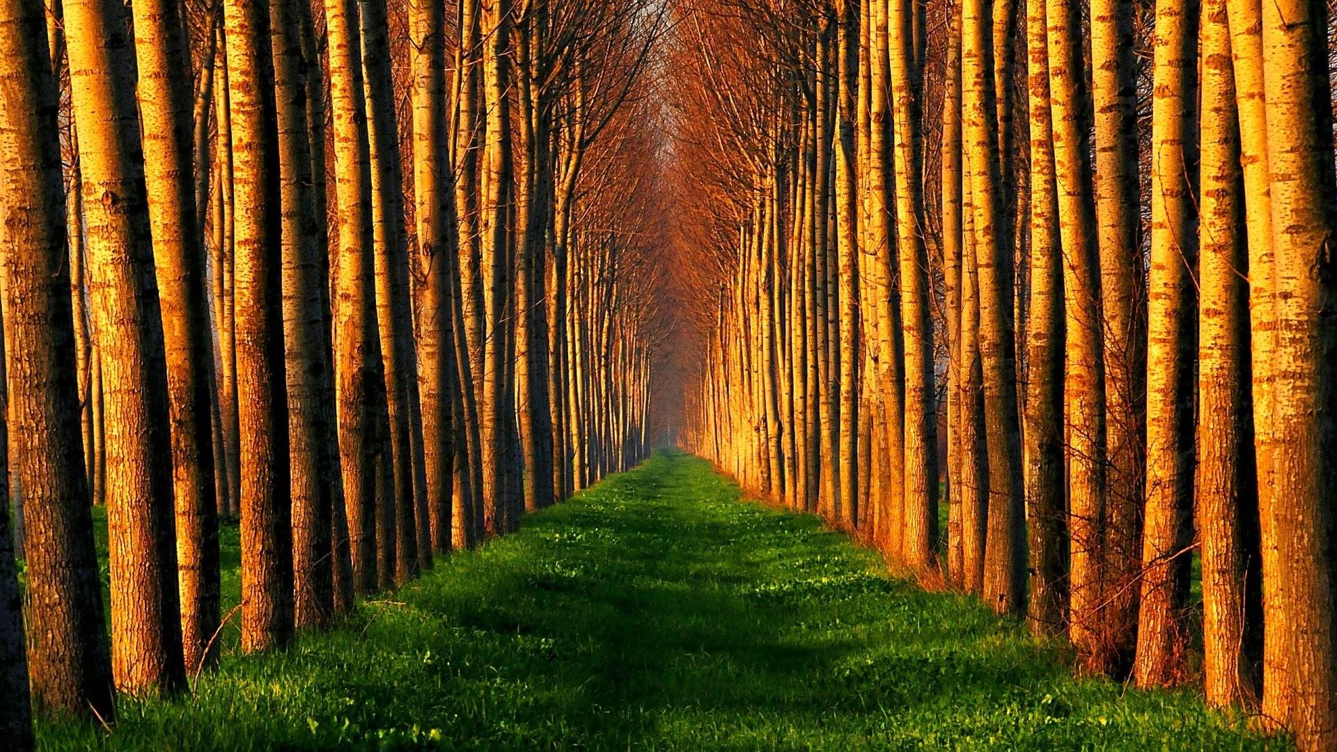 forest desktop background