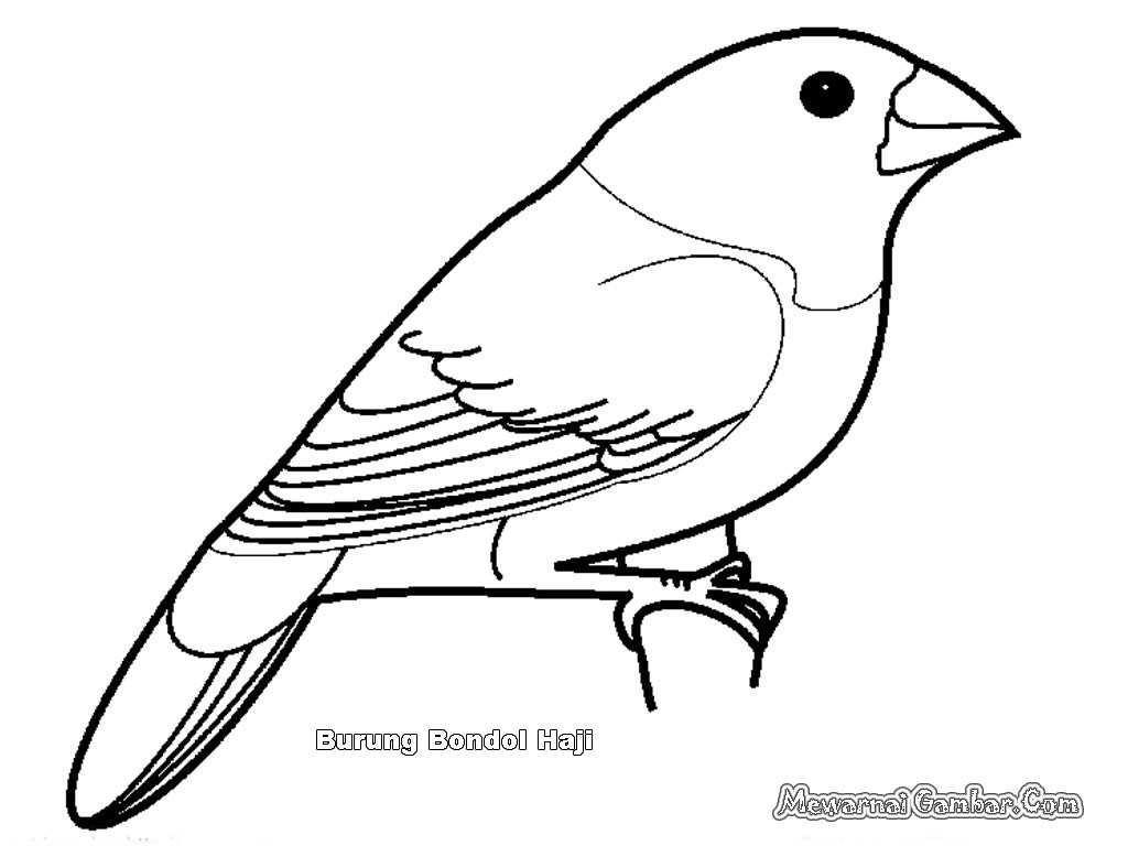 Gambar Kartun Burung Hantu Buat Garskin Mewarnai Gambar