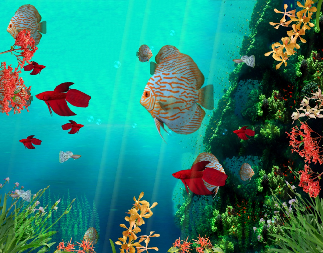 Animated Fish Wallpaper Free Download Aquarium Fish Animated Moving Wallpaper Free Download 817104 Hd Wallpaper Backgrounds Download
