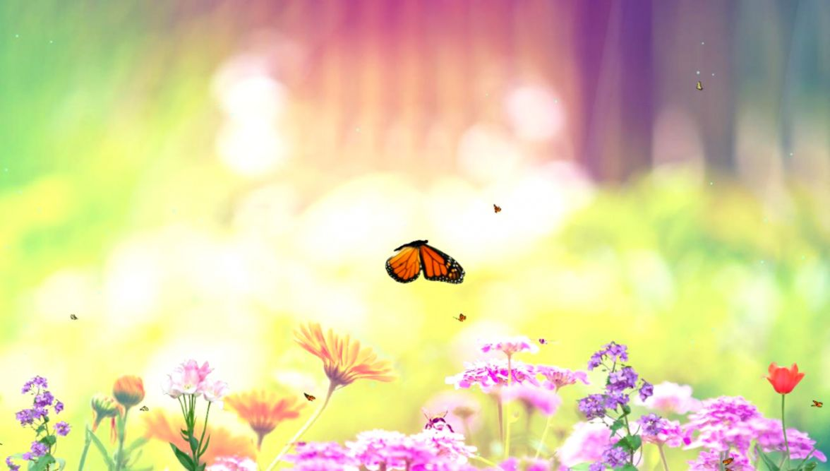 Download Butterfly Paradise Animated Wallpaper - Spring Background , HD Wallpaper & Backgrounds