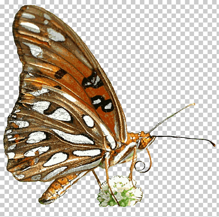 Desktop Animation , Gif Png Clipart - Gif Butterfly Animation Png , HD Wallpaper & Backgrounds