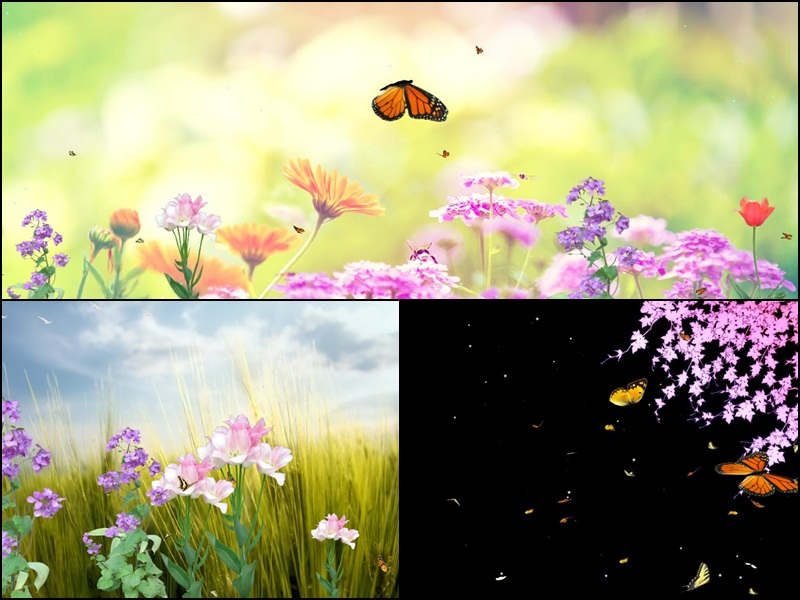Animated Butterfly Wallpaper Moving - Butterfly Paradise , HD Wallpaper & Backgrounds