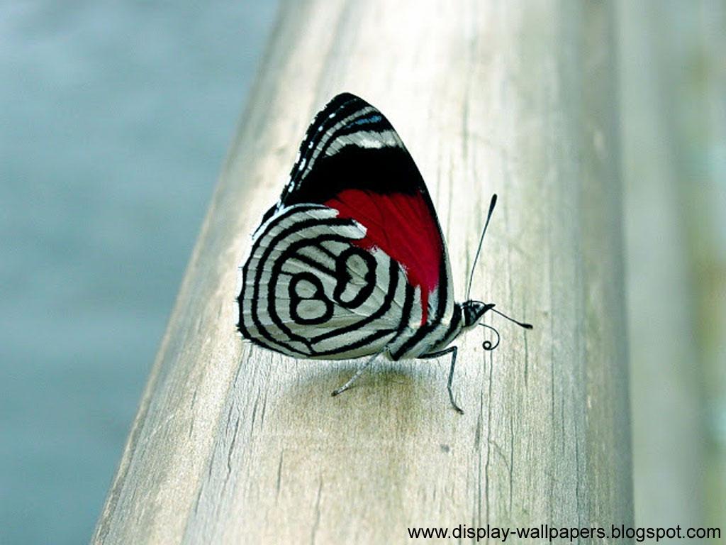 Butterfly Desktop Wallpaper Hd - Moving Butterfly , HD Wallpaper & Backgrounds