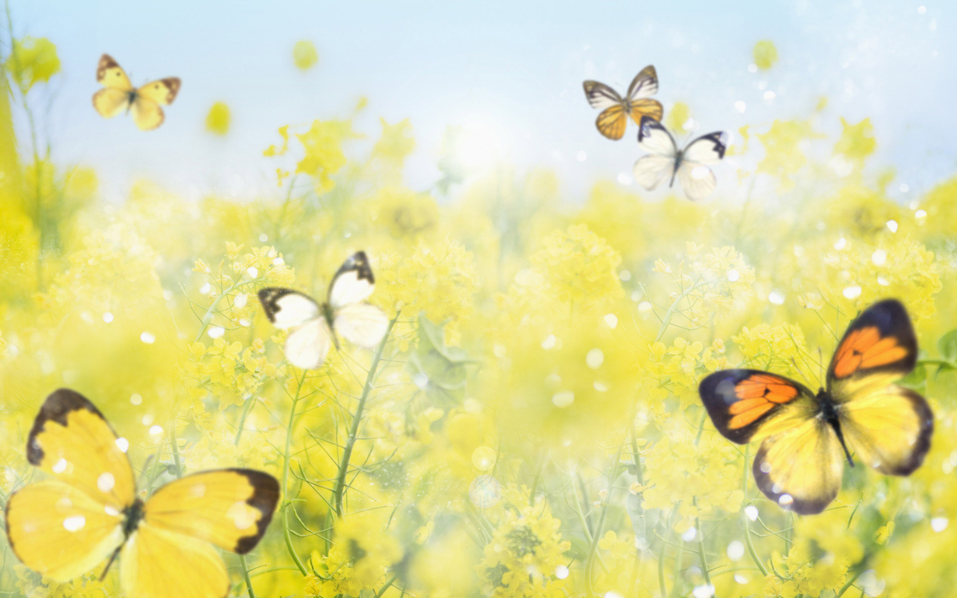 Yellow Butterfly Wallpapers - Beautiful Butterflies With Flowers , HD Wallpaper & Backgrounds