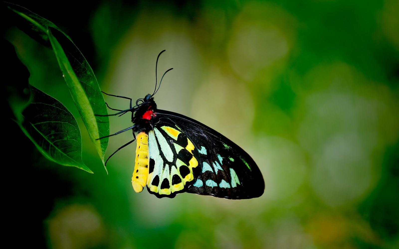Butterfly World , HD Wallpaper & Backgrounds