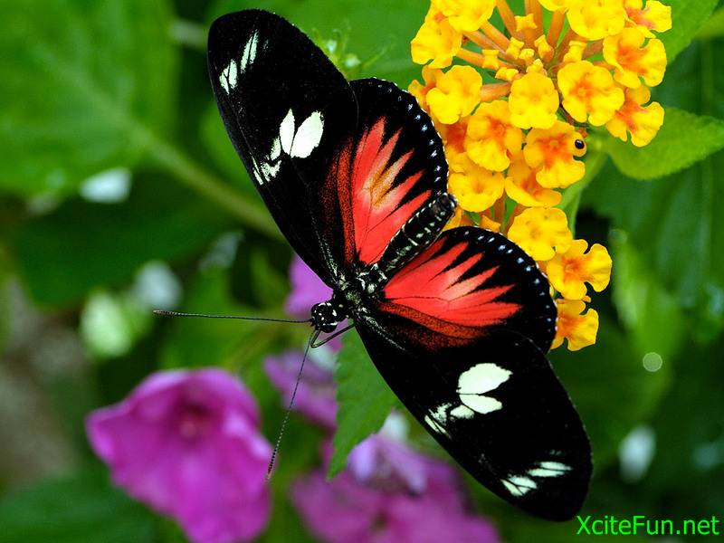 Wallpapers Beautiful Butterfly Hd 817710 Hd Wallpaper