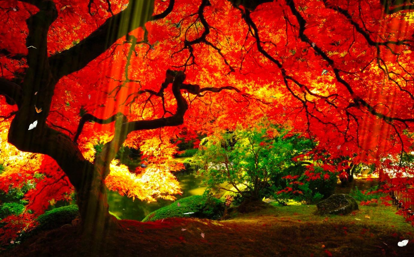 Click Here To See This Image Full Size - Pretty Fall Trees , HD Wallpaper & Backgrounds