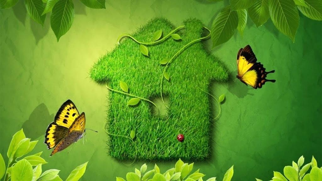 Nature Love Wallpapers Hd 1080p Wallpaper Green Hd Wallpaper