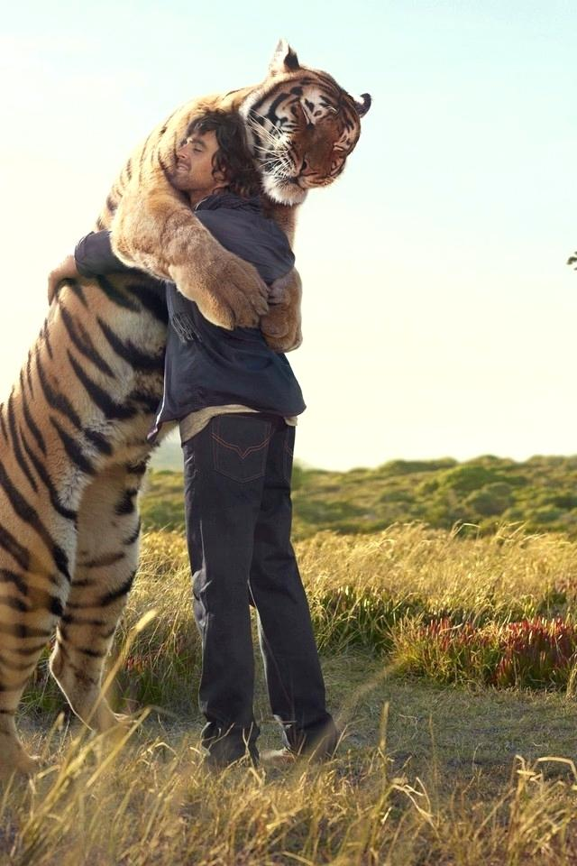 Nature Love Wallpaper For Mobile Animals Fields Hugging - Tiger Wallpaper For Android , HD Wallpaper & Backgrounds