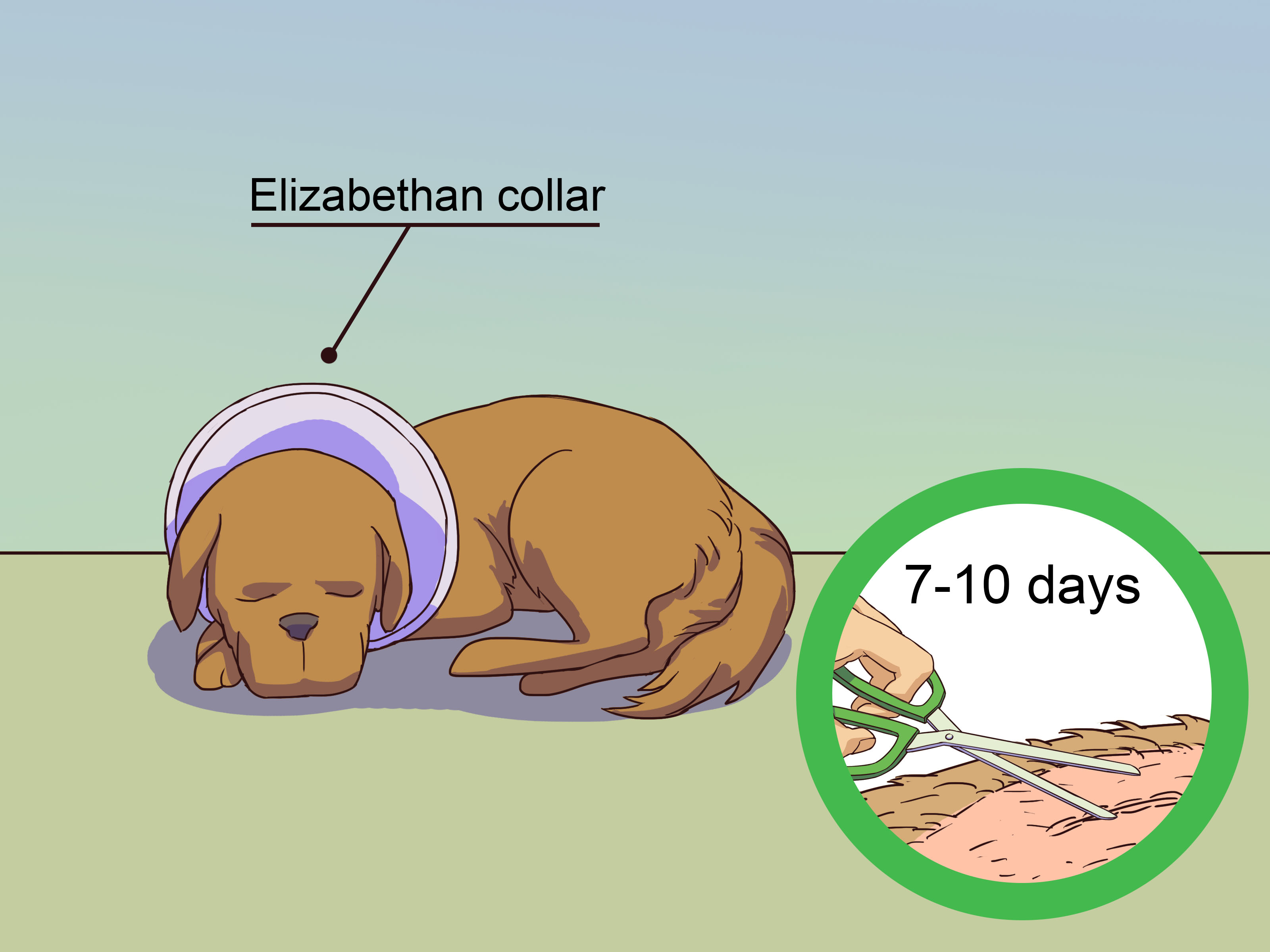 How To Calm A Male Dog When A Female Is In Heat - Methanol Spray For Dogs , HD Wallpaper & Backgrounds