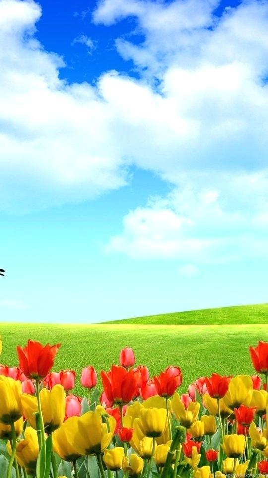 Beautiful Nature Wallpaper For Mobile Hd Wallpapers Full Screen Beautiful Nature 827590 Hd Wallpaper Backgrounds Download