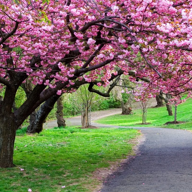 10 New Beautiful Nature Wallpaper Spring Full Hd 1080p - Springtime Wallpaper For Android , HD Wallpaper & Backgrounds