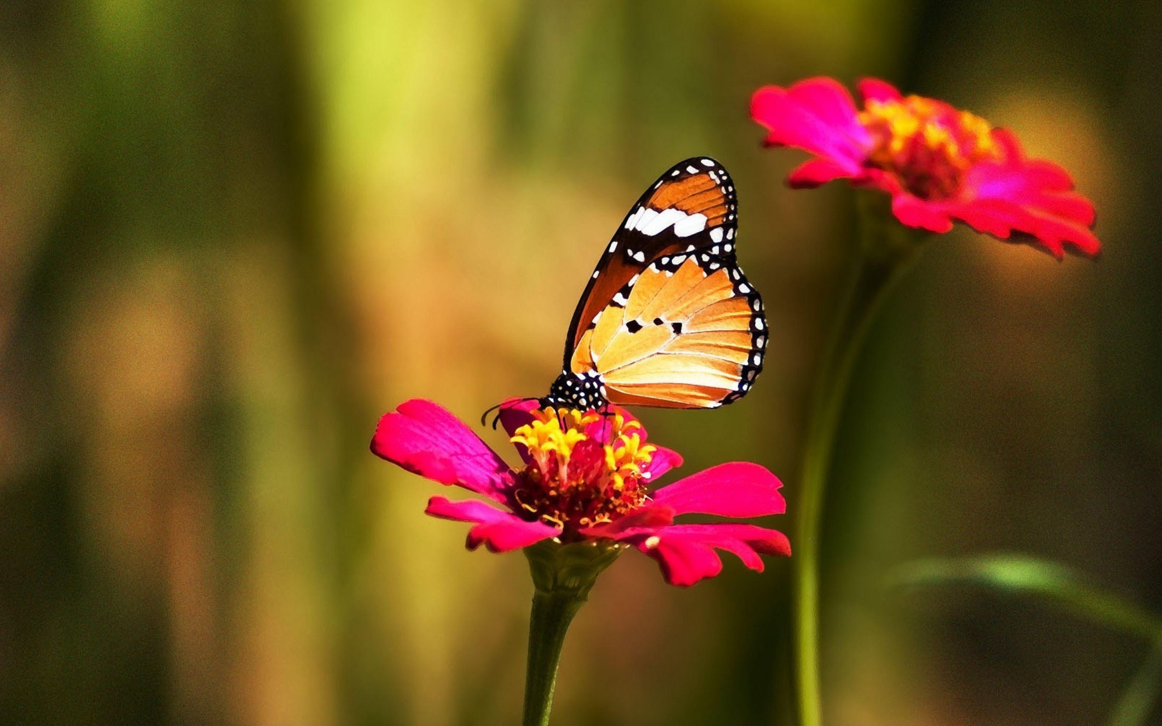 0 Butterflies Wallpaper Collection Butterflies And Imagenes