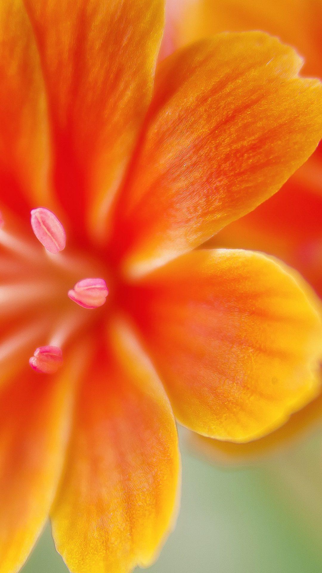 83 831249 4k orange flowers wallpaper for iphone flower 4k