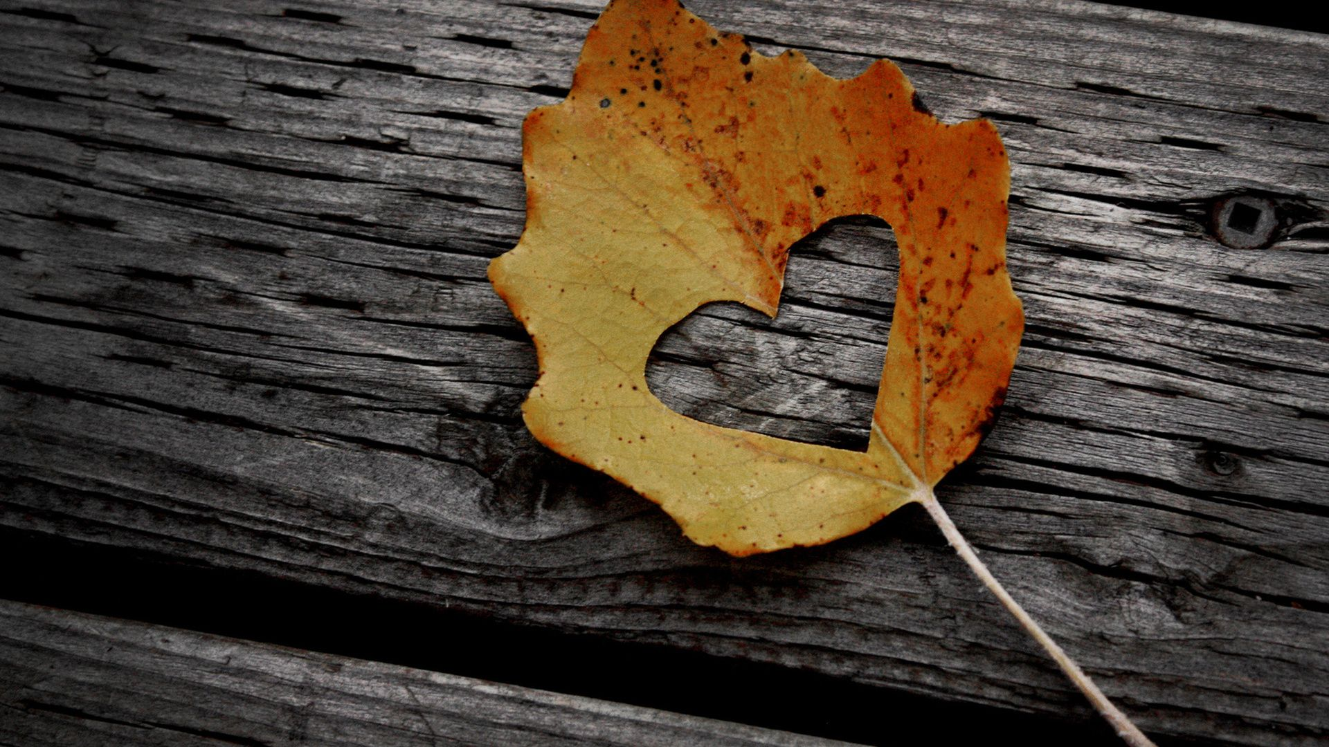 Love Symbol In Leaves Love Desktop Wallpaper Hd 833306 Hd