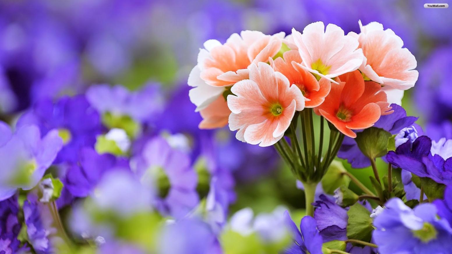 World Beautiful Flowers Wallpaper Group 20 Beautiful - Windows 10 Wallpaper Flower Hd , HD Wallpaper & Backgrounds