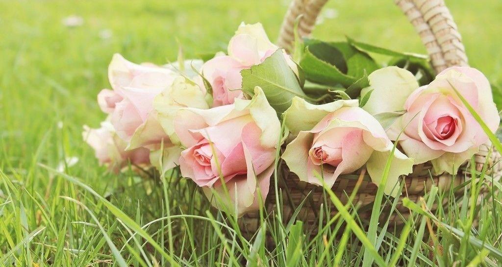 Rose Flower Wallpaper Hd Lovely Shayari Urdu Best Roses - Muhammad Pbuh Name In Roses , HD Wallpaper & Backgrounds