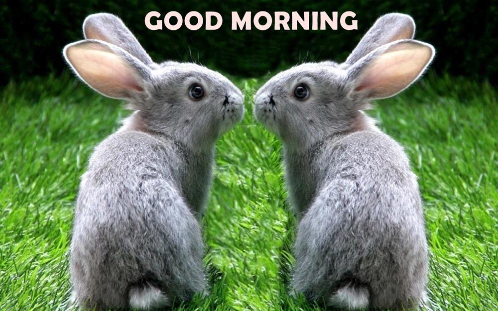 Good Morning Couple Rabbit Hd Wallpaper - Good Morning Quotes Rabbit , HD Wallpaper & Backgrounds