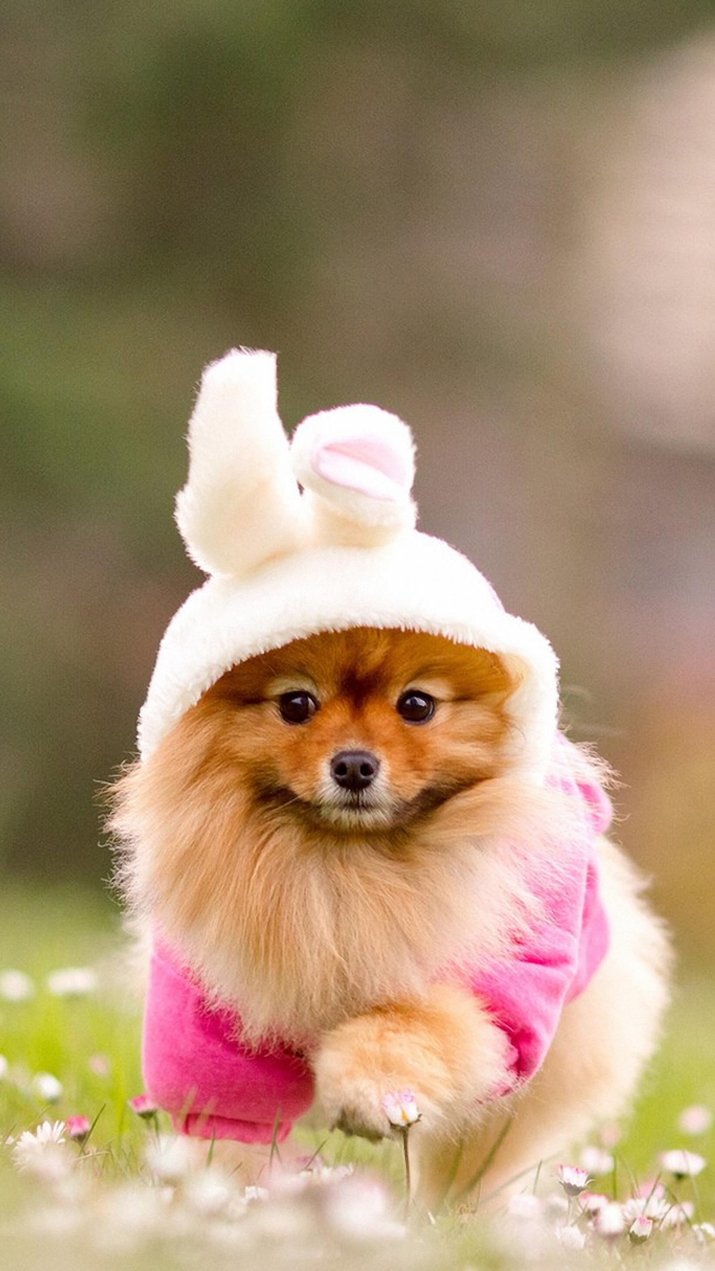 Photos Cute Phone Backgrounds Cute Dog Wallpaper Iphone 842713