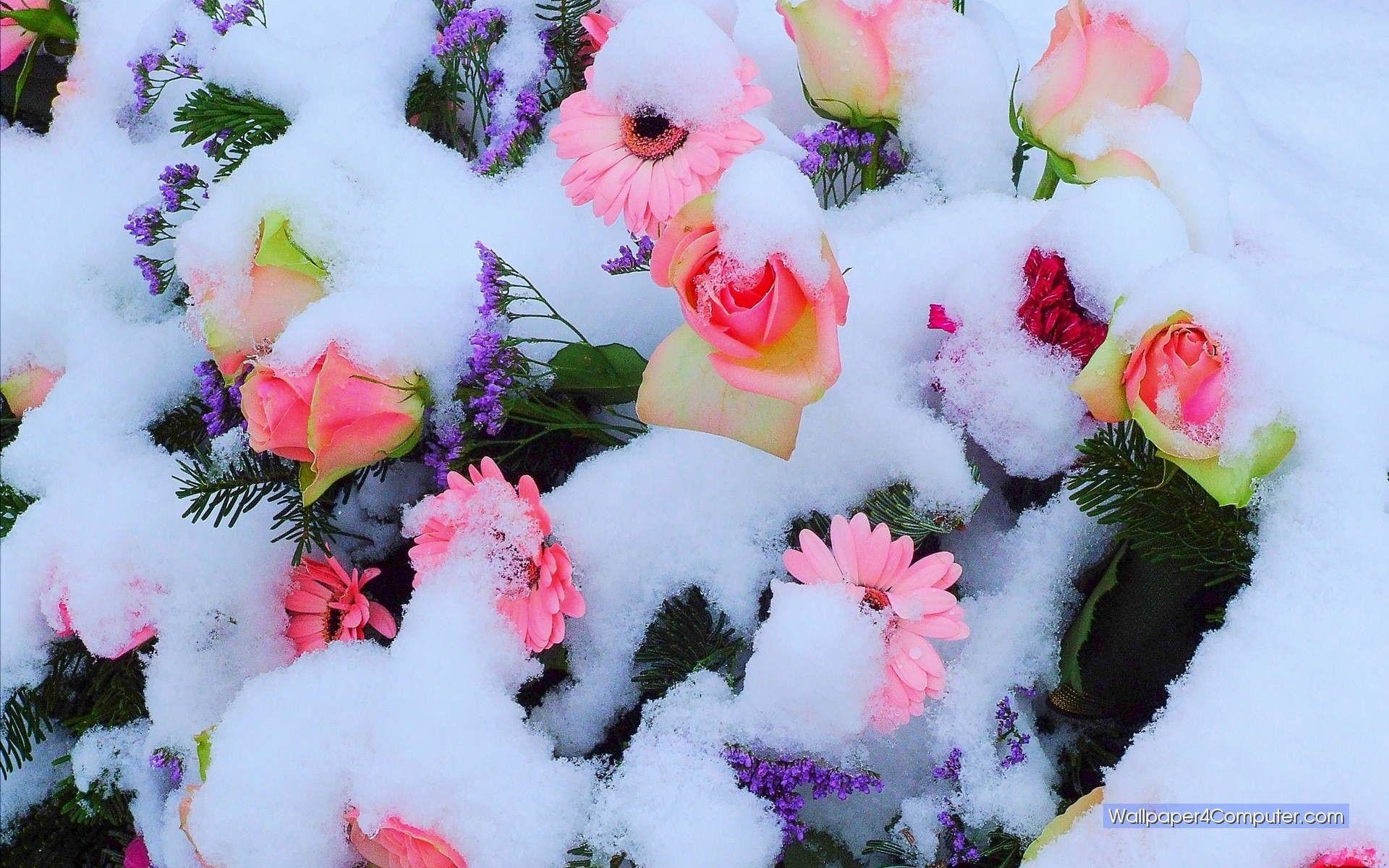 Зима и розы картинки красивые необычные нежные
