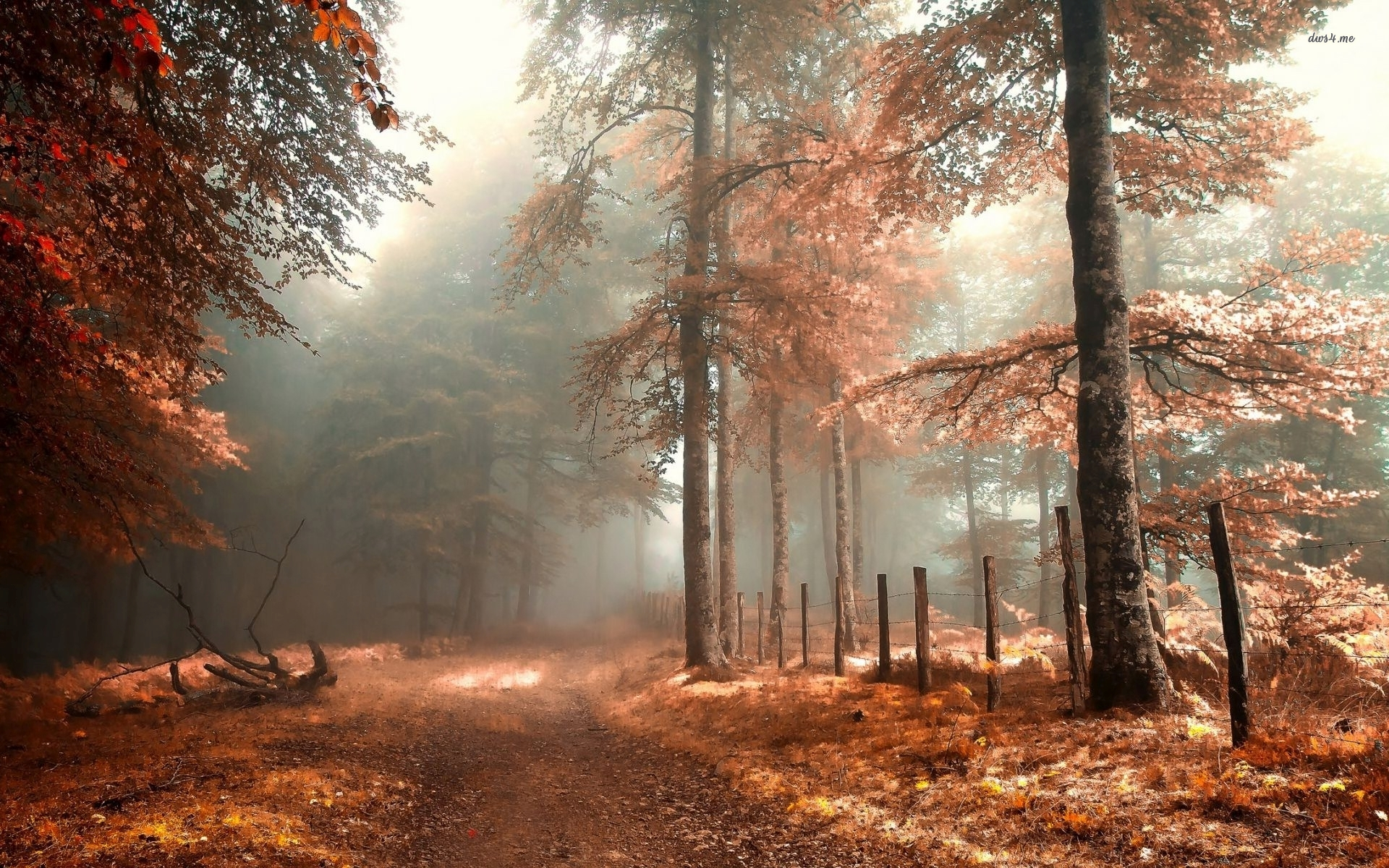 Autumn Nature Widescreen Wallpaper And Background Autumn