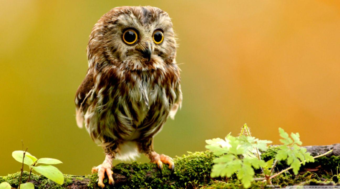 Cute Owl ❤ 4k Hd Desktop Wallpaper For 4k Ultra Hd - Baby Owl In Tree , HD Wallpaper & Backgrounds