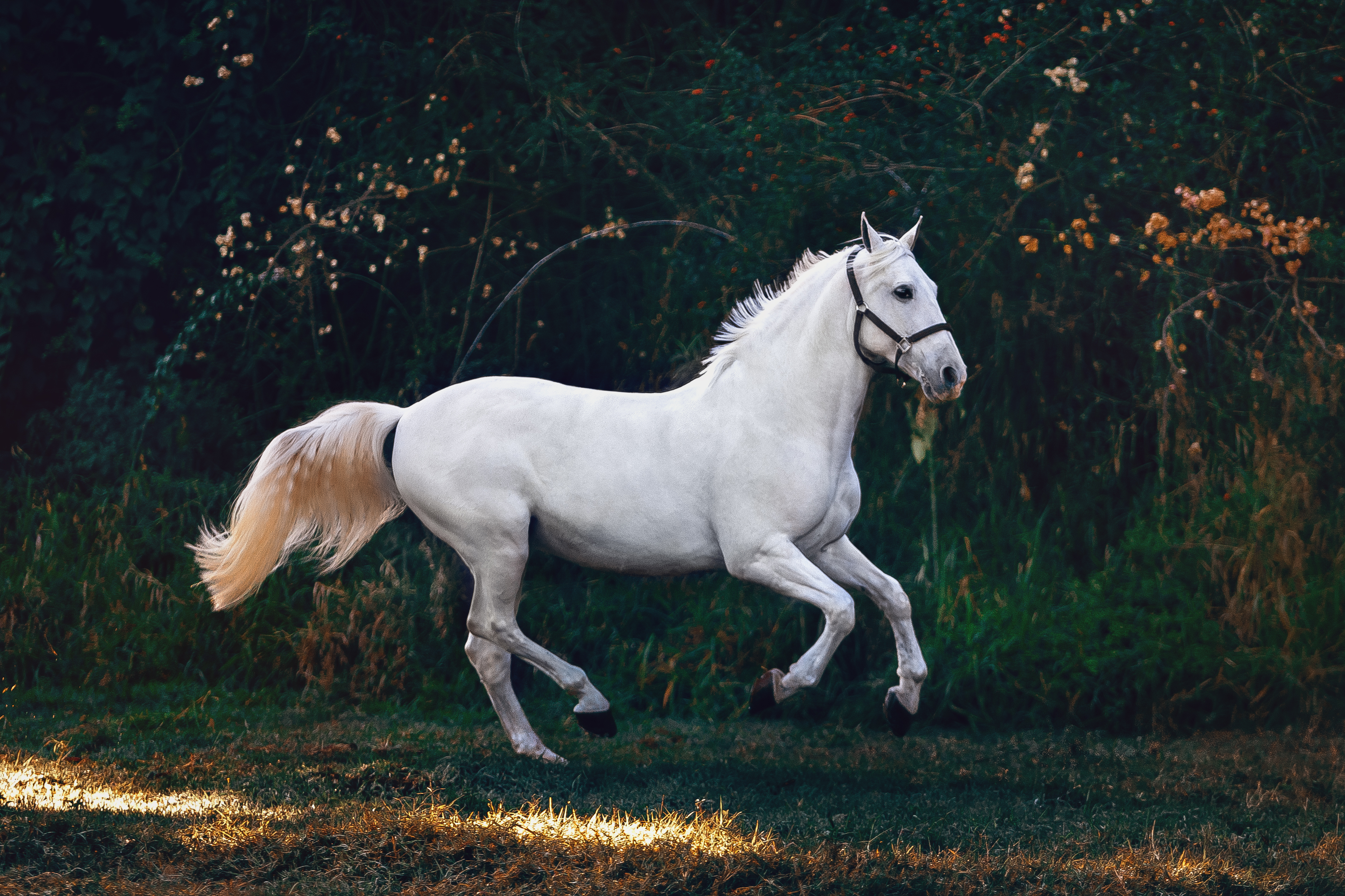 Leaping White Horse Illustration Horse 853532 Hd Wallpaper Backgrounds Download