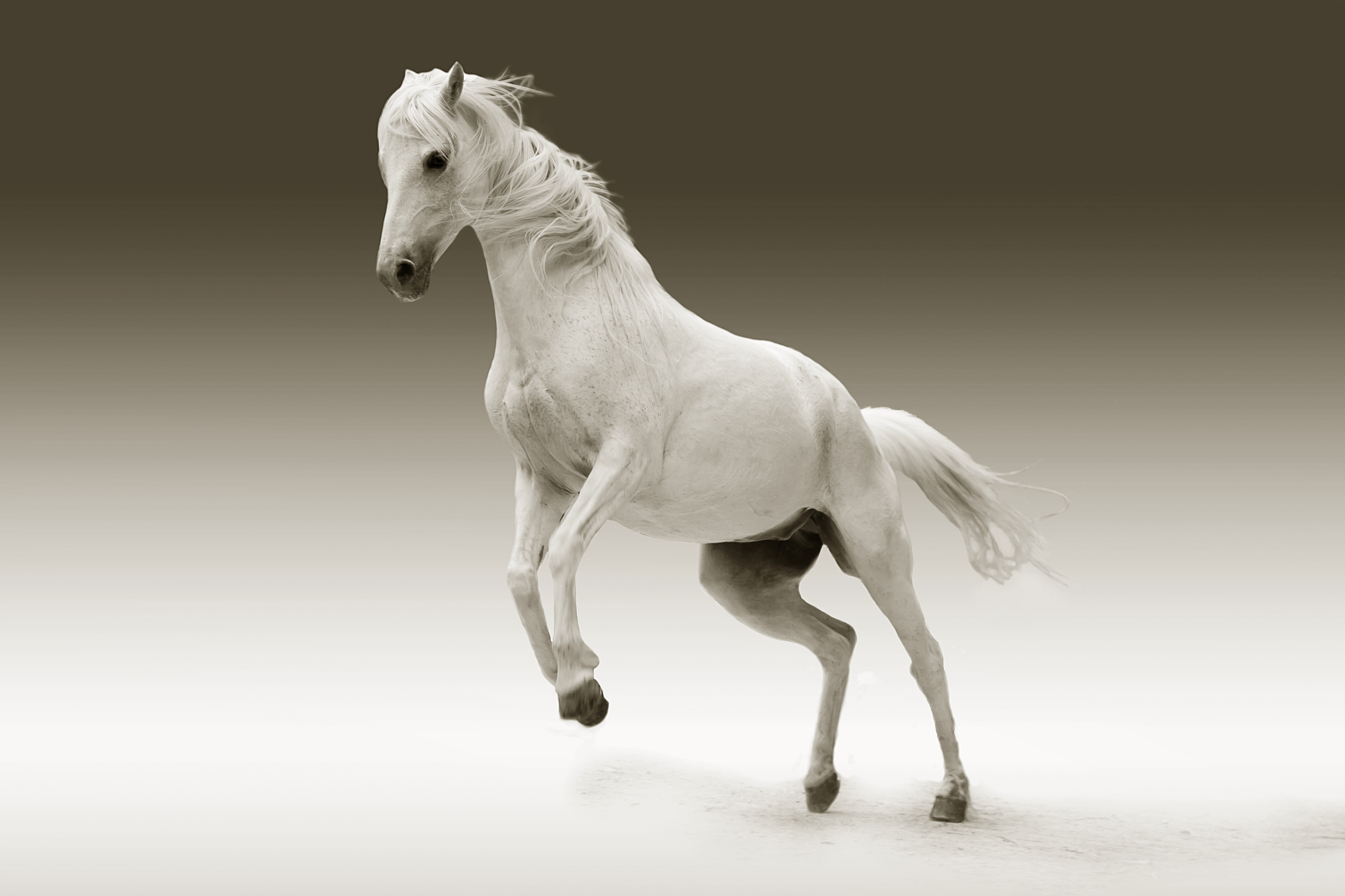 Leaping White Horse Illustration All Animal 853576 Hd Wallpaper Backgrounds Download