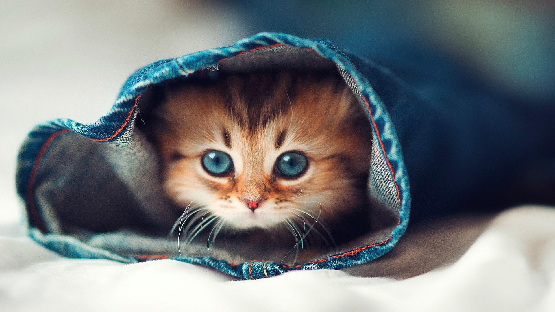 Free Cat Hd Wallpaper Full Pics Backgrounds Cats Desktop ...