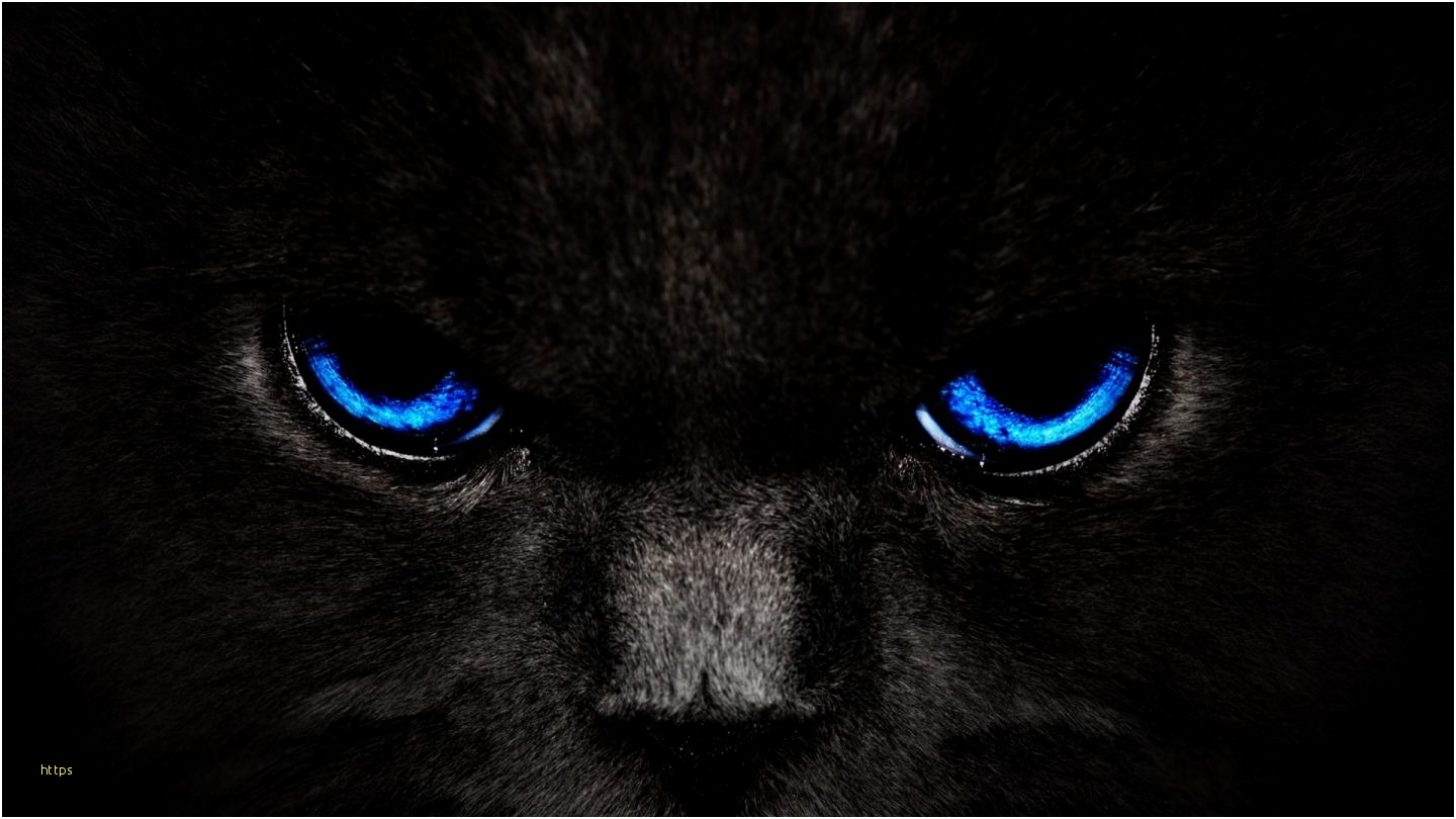 Cool Cat Wallpapers Elegant Wallpapers Hd Page Black