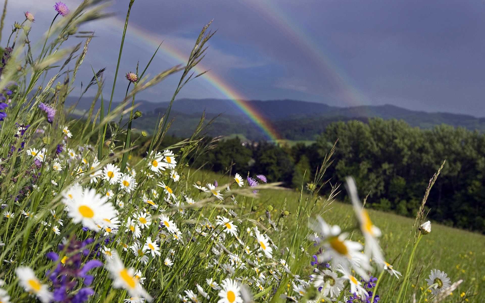 Mobile Wallpaper, Beauty, Mountain, Nature, Hd Flower - Rainbow Over A Meadow , HD Wallpaper & Backgrounds