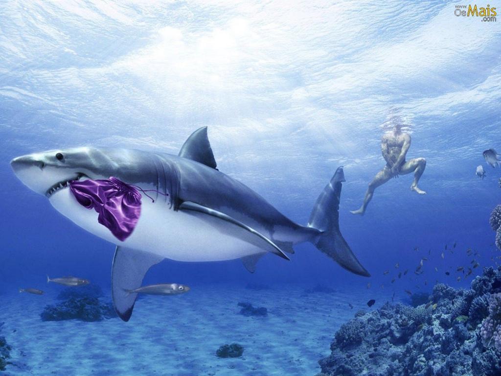 Papel De Parede Tubarão Malandro - Tubarao Plano De Fundo , HD Wallpaper & Backgrounds
