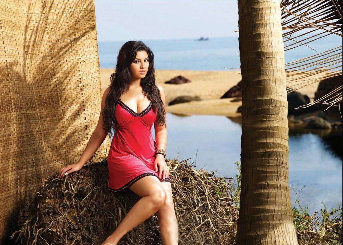 South Indian Hot Deeksha Seth 2016 Photoshoot Wallpapers - Deeksha Seth Hot Saree , HD Wallpaper & Backgrounds