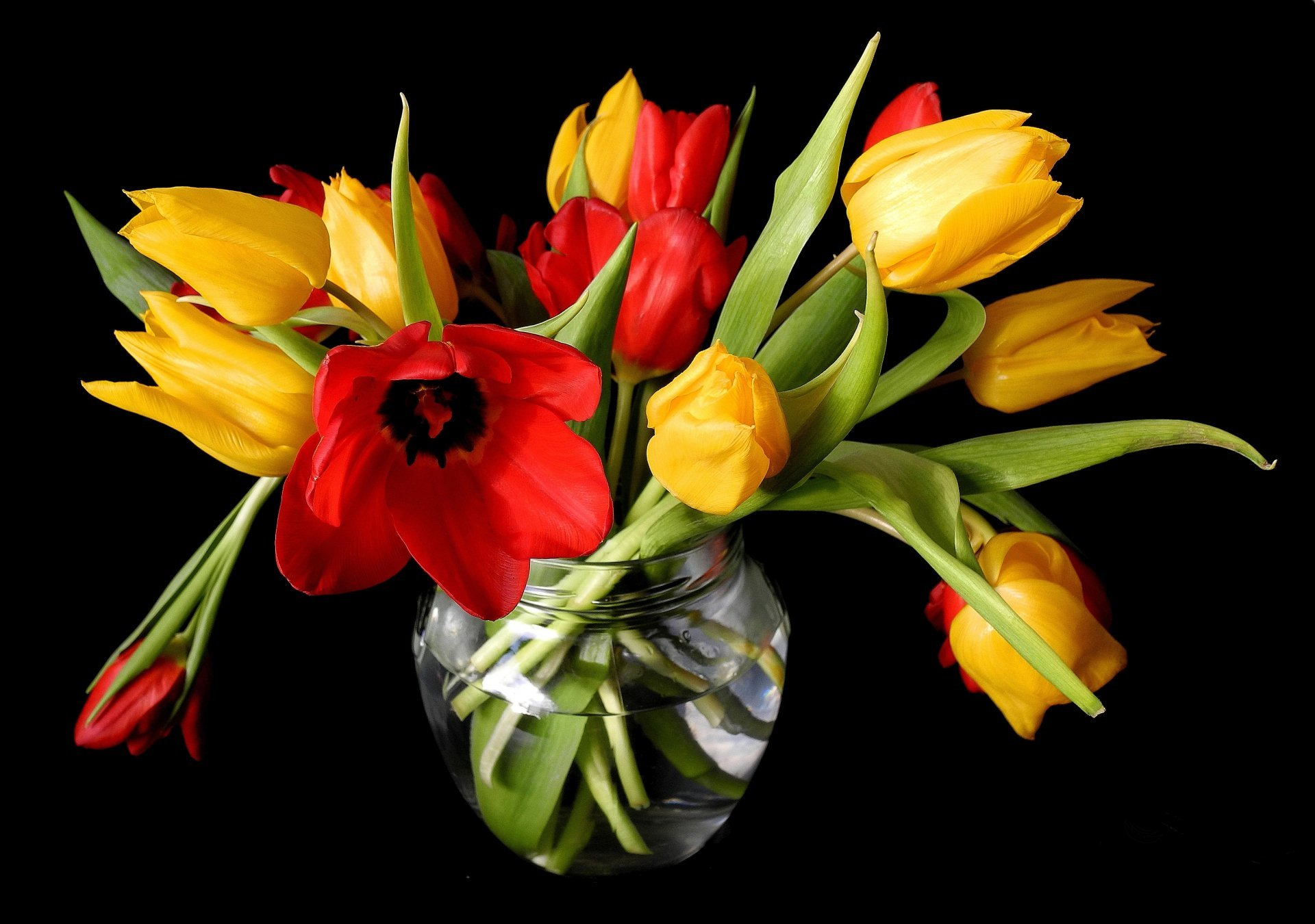 Spring Tulips Yellow Red Vase Flower Buds Black Background Spring Flowers Black Background 869375 Hd Wallpaper Backgrounds Download