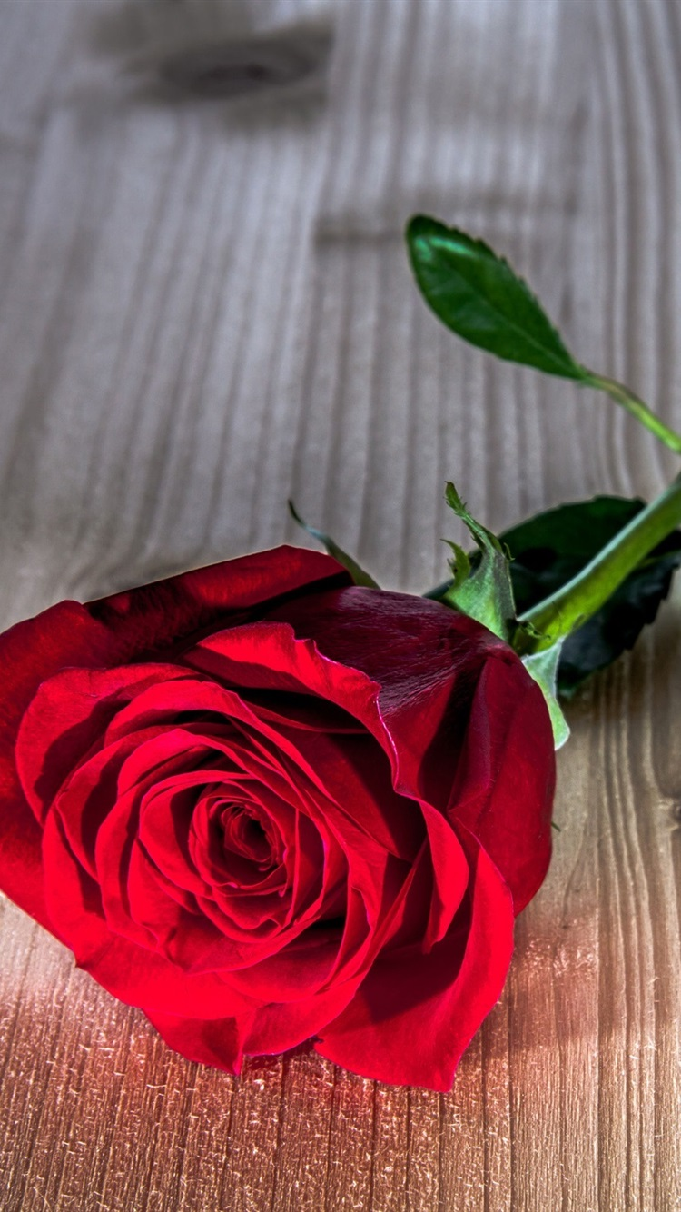 Rose Flower On Table , HD Wallpaper & Backgrounds