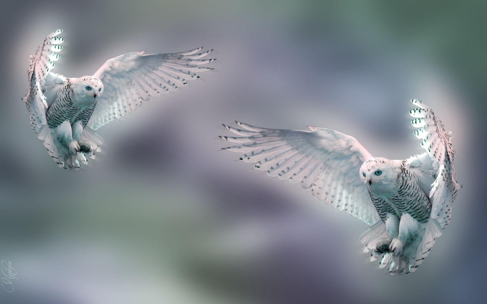 Dieren 002 Wide Snow Owl 878755 Hd Wallpaper